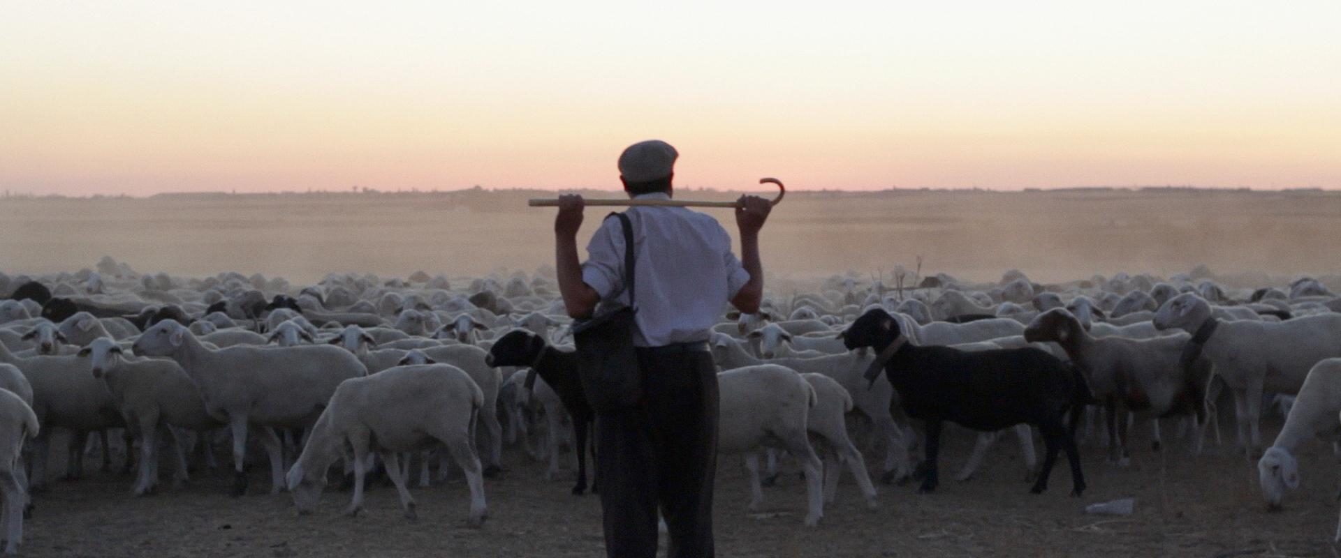 The Shepherd still